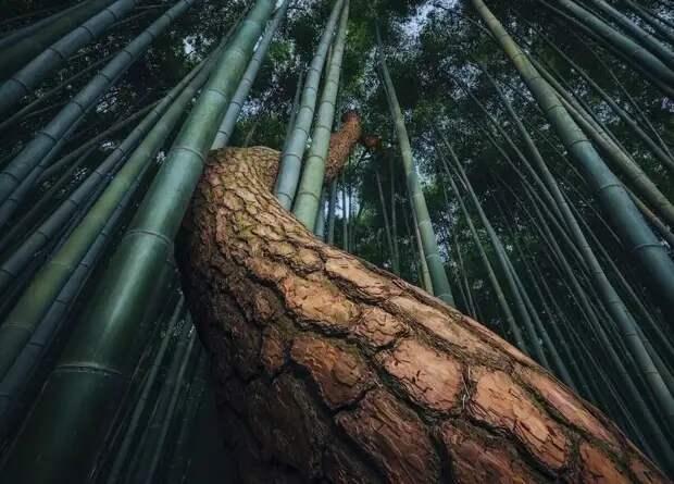 Природа без фотошопа 47