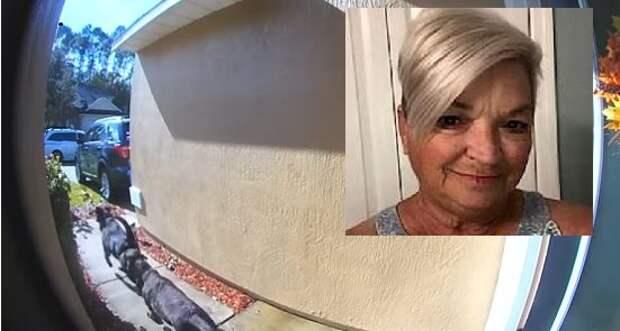 Два лабрадора вызвали помощь, когда их хозяйка слегла с инсультом
