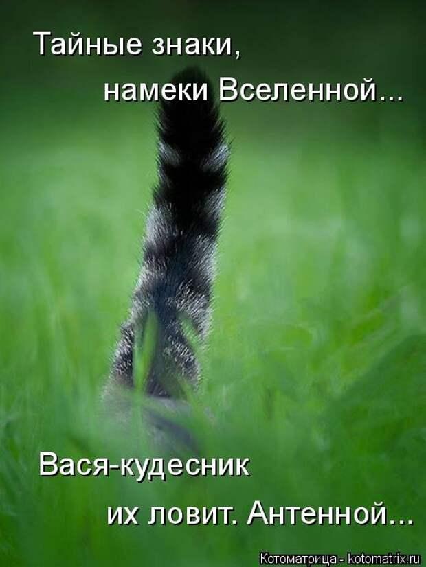 1474017328_kotomatricy-14