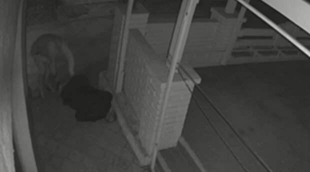 Симферополец избил пенсионера и украл у него кнопочный телефон. Видео