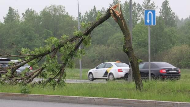 Костромского подростка насмерть прибило упавшим деревом