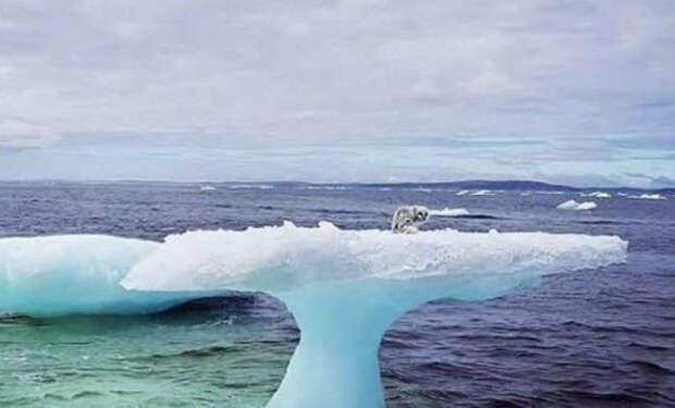 Рыбаки подплыли к льдине и обнаружили странное животное