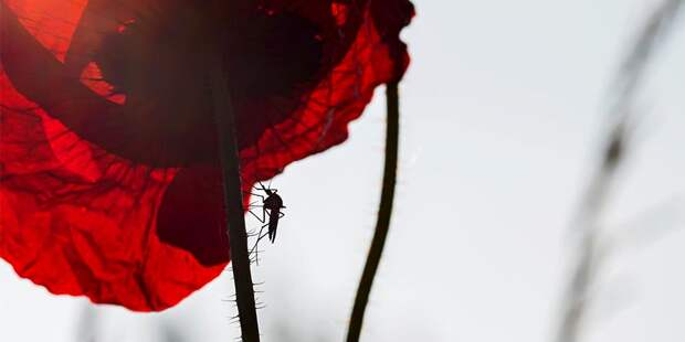 Всемирный день комара: что нужно добавить в меню, чтобы не быть покусанным?  | detaly.co.il