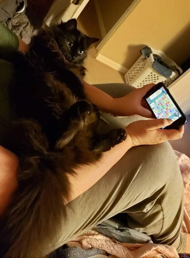 Кошачья наглость