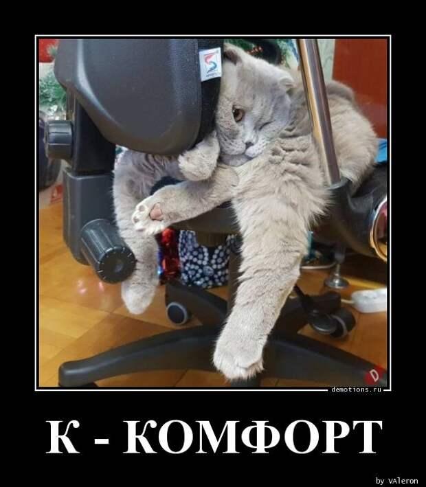 К - Комфорт демотиватор, демотиваторы, жизненно, картинки, подборка, прикол, смех, юмор