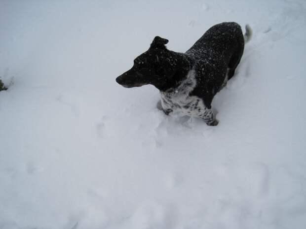 В Британии теперь можно сесть в тюрьму, если твой пёс мёрзнет на улице!