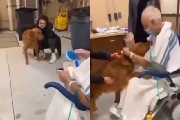 Преданный пес не смог сдержать эмоций, встретившись с больным хозяином