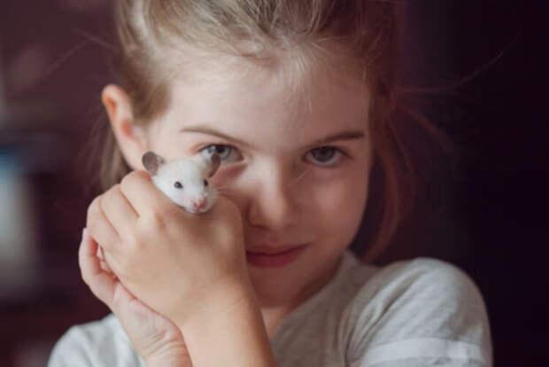 Мама, хочу питомца!.. желательно крысу. История мамы