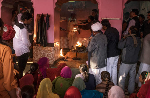 Пожалуй, самое мерзкое святилище в мире: крысиный рай в Индии