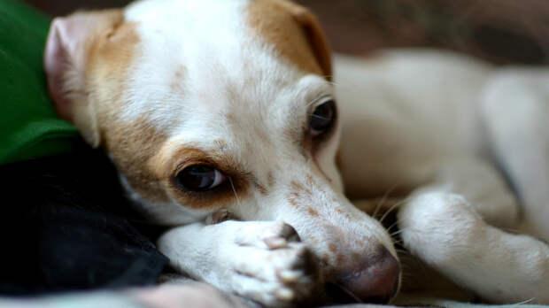 Собаки в суде: необычные процессы
