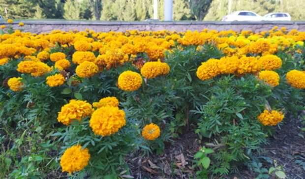 Цветы на 16 миллионов рублей закупит Екатеринбург к лету
