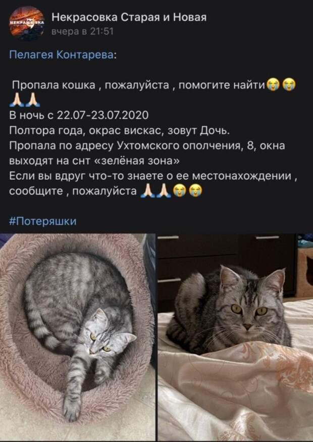 На Ухтомского Ополчения потерялась кошка