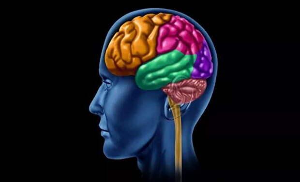 Обнаружили людей с необычным мозгом