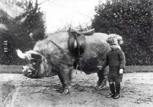 25 забавных ретро-фотографий про дружбу людей и животных, открывающие прошлое с неожиданной стороны