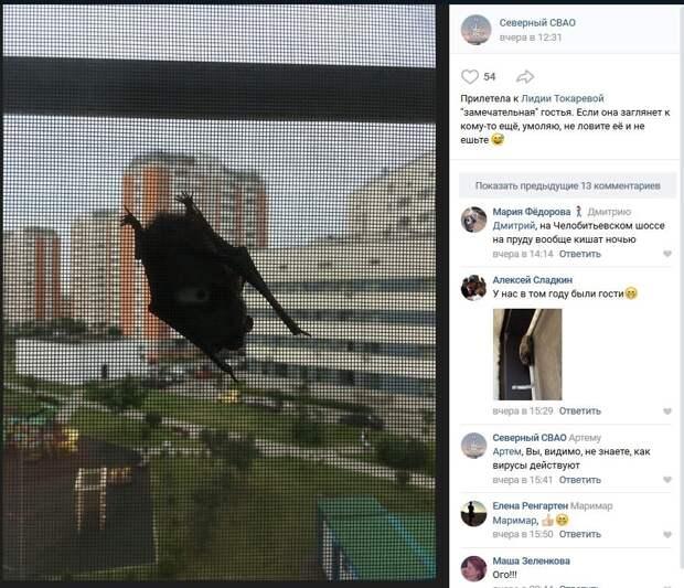 Летучие мыши наведываются в гости к жителям Северного