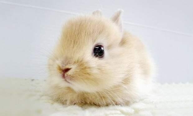 Милые детёныши животных в фотографиях