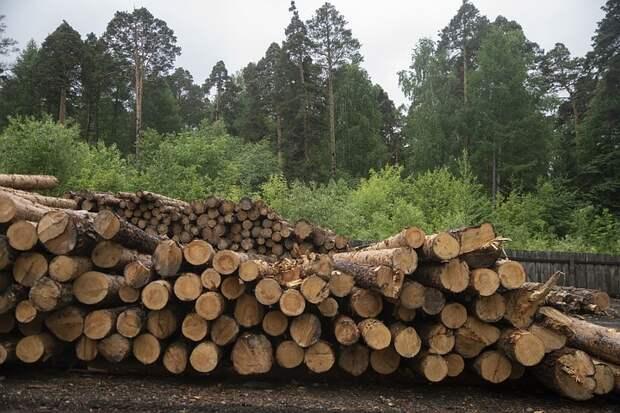 Стройку дачи придется отложить: откуда в России взялся дефицит материалов из дерева