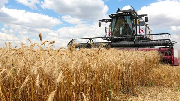 Более 8,2млн тонн зерна собрали наСтаврополье