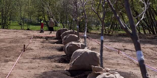 Деревья в Магистральном переулке высадят до 2023 года — управа