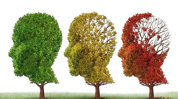 Чашка черного чая в день против болезни Альцгеймера и другие меры профилактики