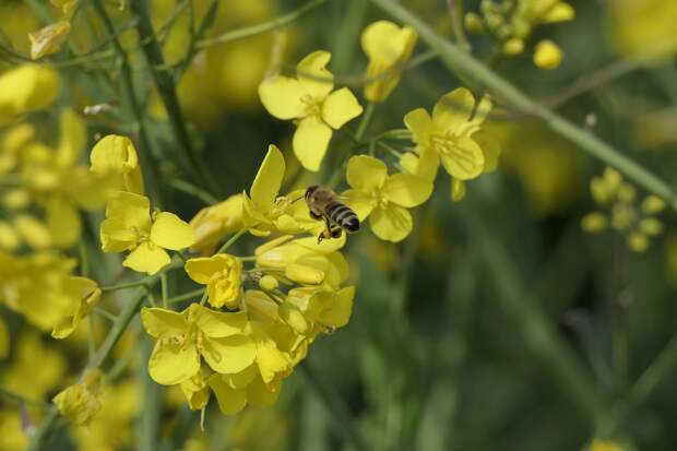 Итоги дня: причины гибели пчёл в Удмуртии, горы мусора в подземке у УдГУ и прохладные выходные
