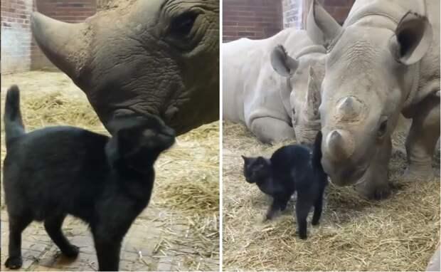 Кошке носорог откусил хвост, а она подружилась с другим