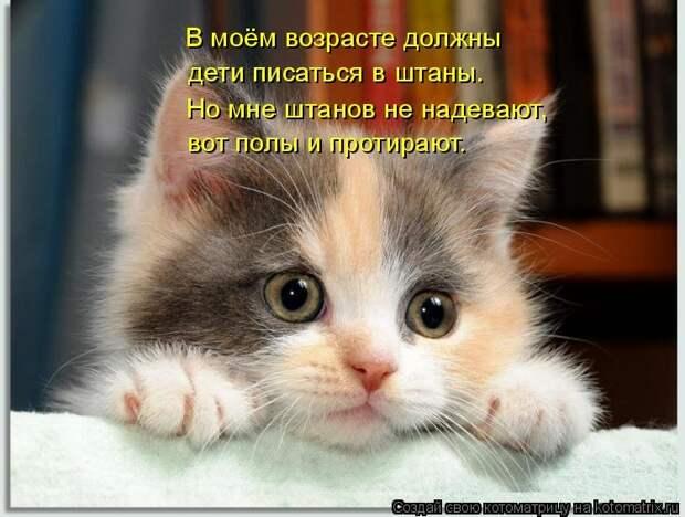 1474017328_kotomatricy-26