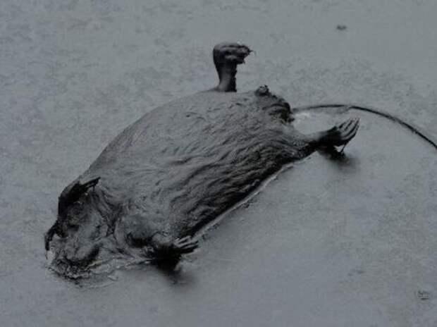«ХМАО, кажется, регион номер один в мире по ущербу природе от нефтяников»
