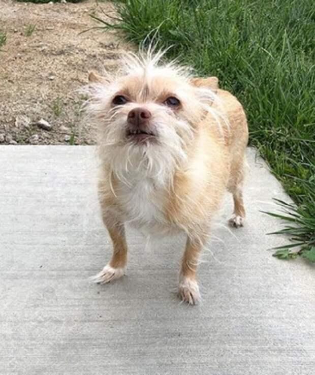 Бездомная собака родила двух больных щенков. Люди считали, что самый слабый непременно погибнет, но ошибались