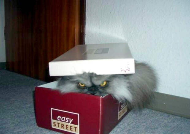 Novate.ru рекомендует, проверить обувные коробки. | Фото: Телеграф.