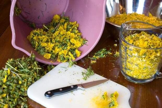 Подготавливаем цветы одуванчика