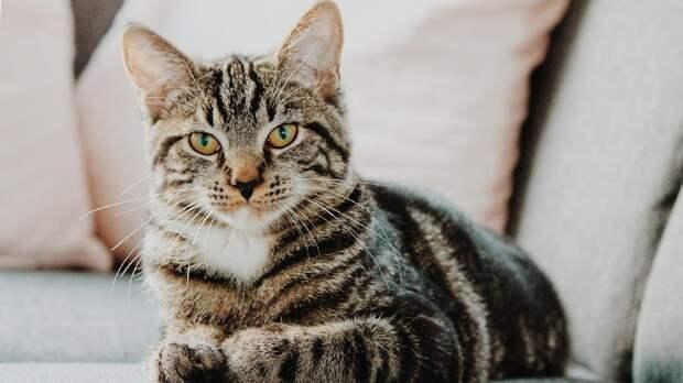 Погубившая более 300 кошек болезнь оказалась неопасной для людей