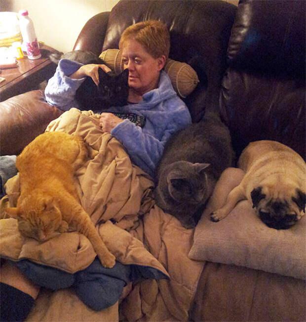 25. Утешают хозяйку после операции животные, жизнь, кот, питомец, семья, собака, фото