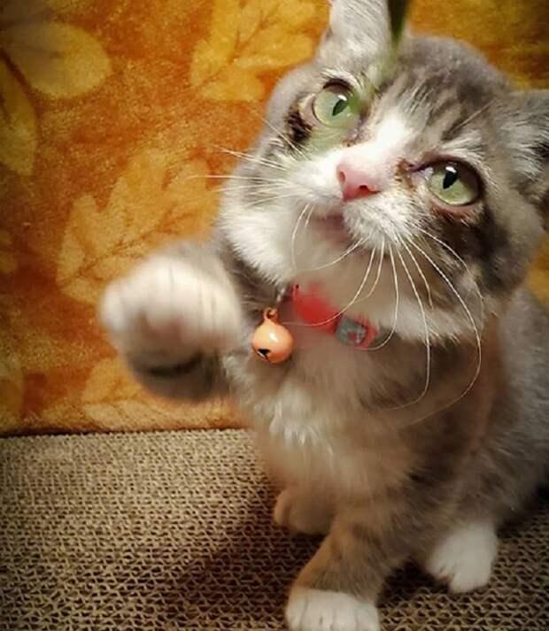 Котенок просит
