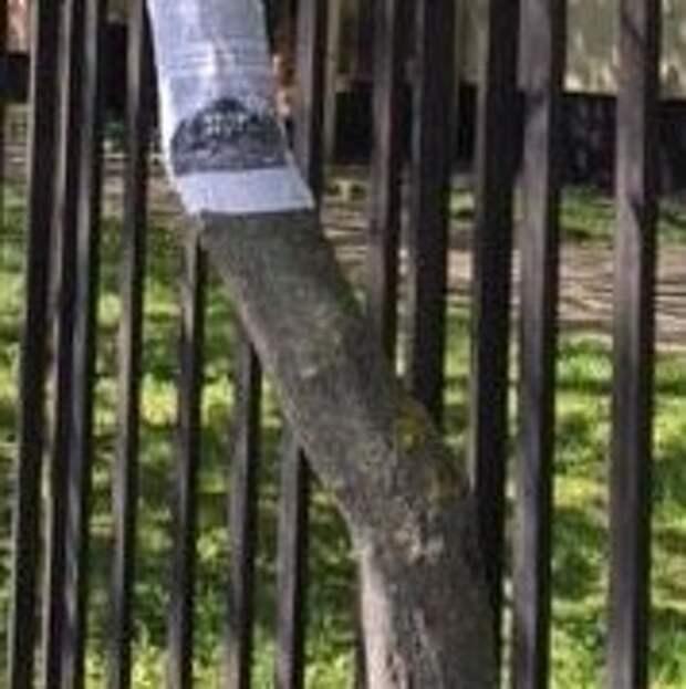 На Молодцова удалили незаконную рекламу с деревьев