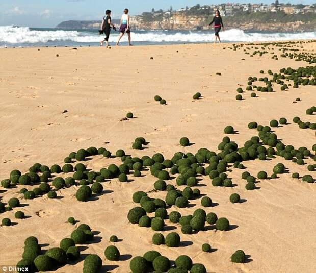 Инопланетные яйца на пляже в Сиднее_2