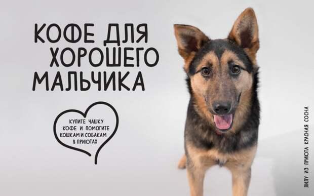 8 февраля выпейте кофе и помогите кошкам и собакам в приютах