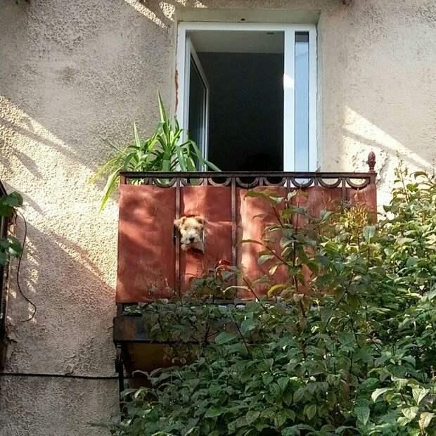 12 смешных покорителей балконов на своих наблюдательных пунктах