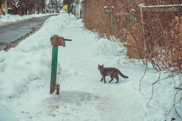Хранитель колонки Хвостатые, братья наши меньшие, город, кот, кошка, улица, уличные кошки, эстетика