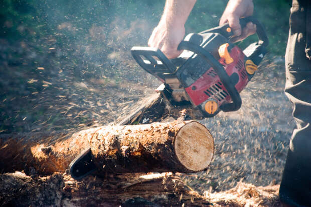Спиленные деревья вывезут из двора на улице Искры до конца недели – управа