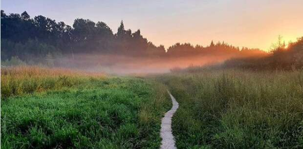 Фото дня: лес Северного в тумане