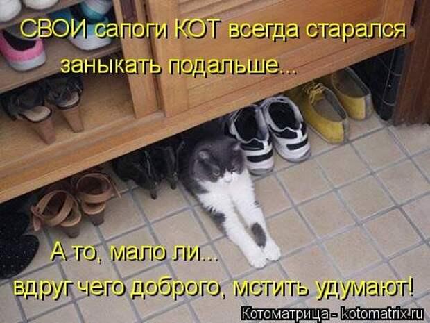 1474017321_kotomatricy-17