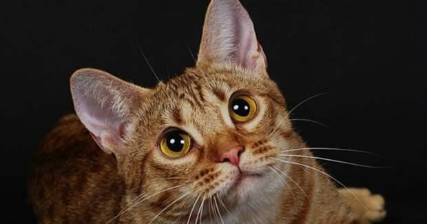 Врачи сказали, что кот обречён. Но бедное животное поползло к детям, надеясь на утешение…