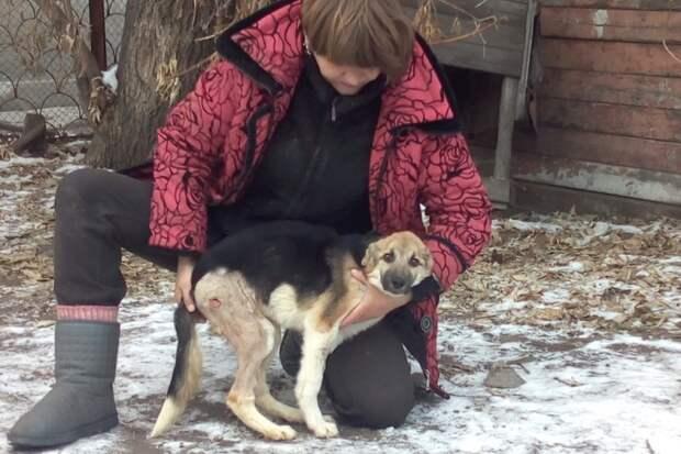 Собака была не в силах даже поднять голову, когда ее нашли на улице дворняга, пес, приют, собака
