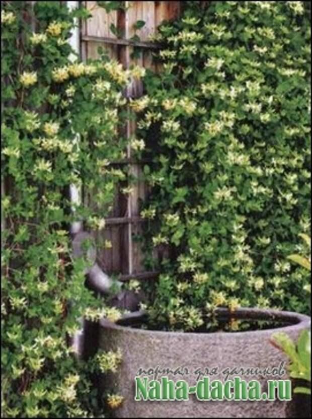Декоративный фонтан для дачи