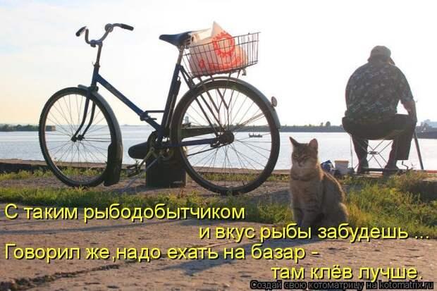 1474017315_kotomatricy-4