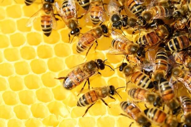 """На """"Укрпочте"""" застряли восемь миллионов пчел"""