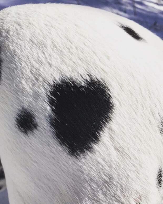 У нашей собаки есть второе сердце.