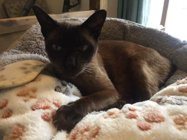 Спасение кошки, которую на 2 недели бросили в запертом замусоренном доме