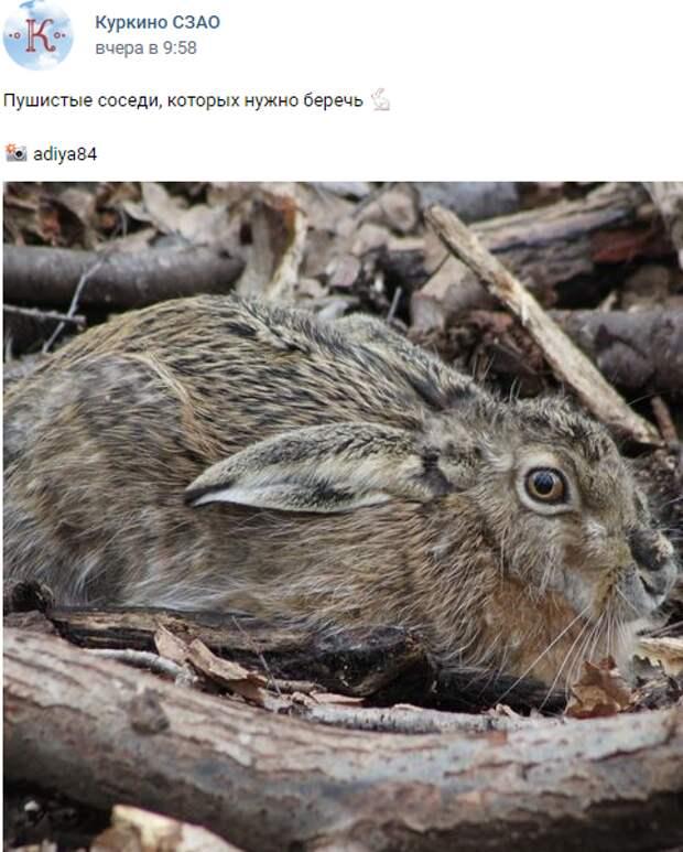 Фото дня: испуганный заяц